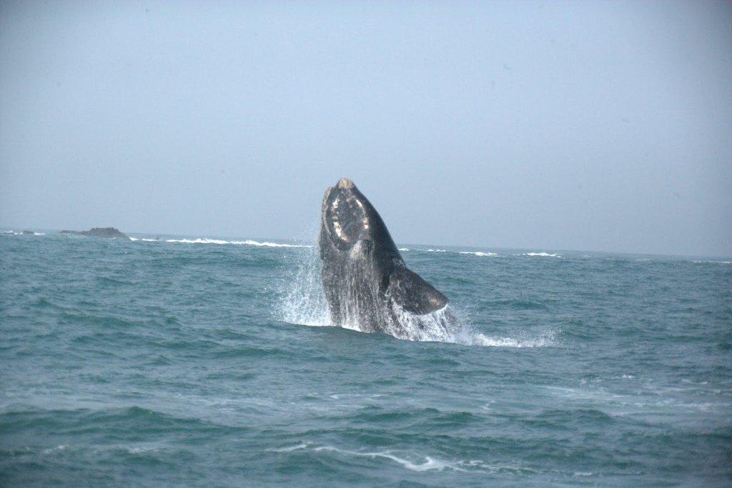 Programação com especialistas em turismo de observação de baleias do Brasil e da Argentina