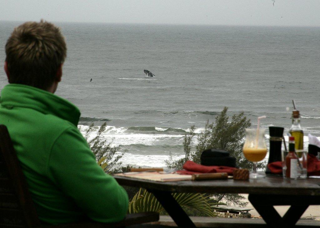 Temporada de avistamento segue até novembro no litoral catarinense
