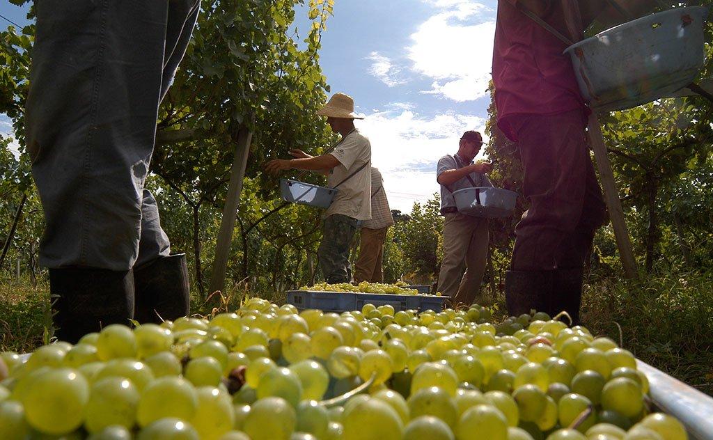 Reconhecimento aconteceu em Bento Gonçalves (RS), no maior evento de avaliação vinícola mundial
