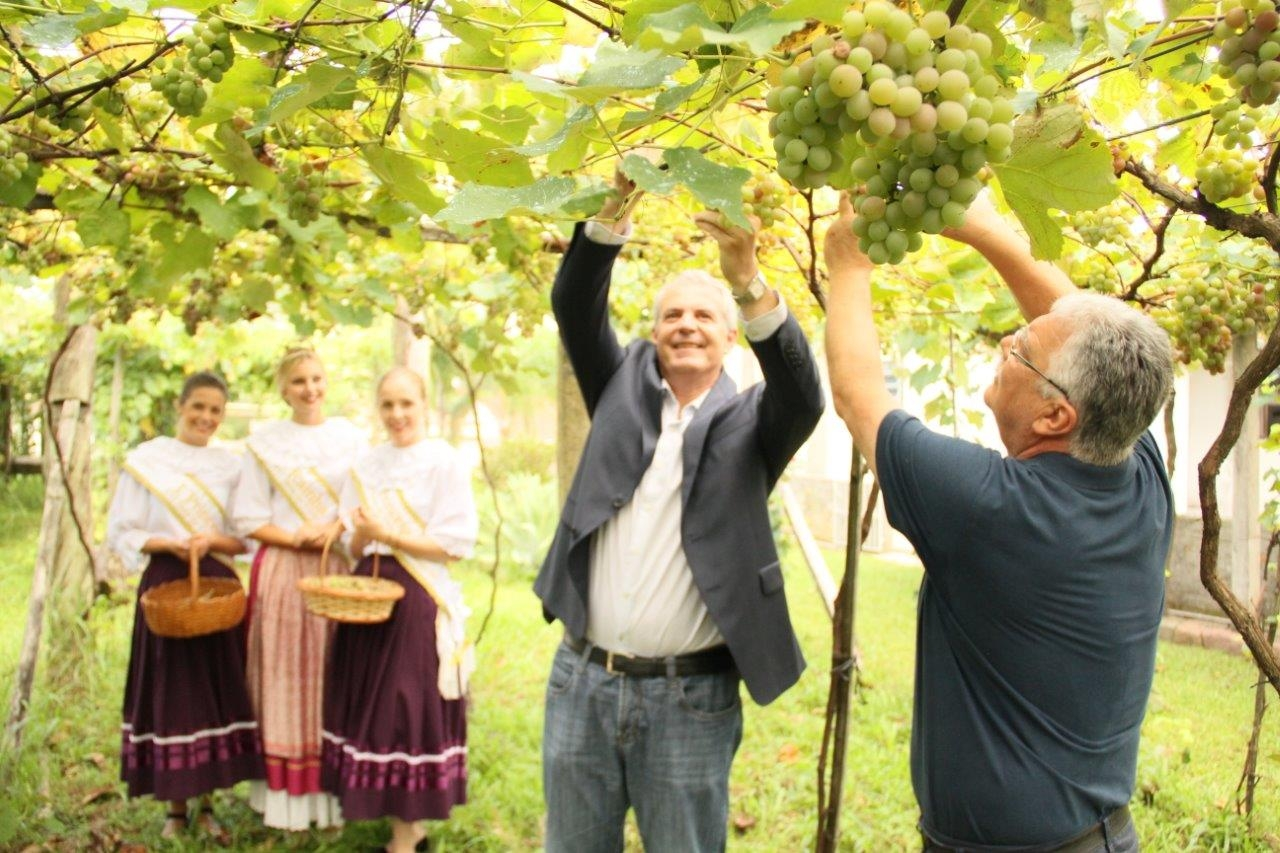 Celebração à farta colheita da Uva Goethe