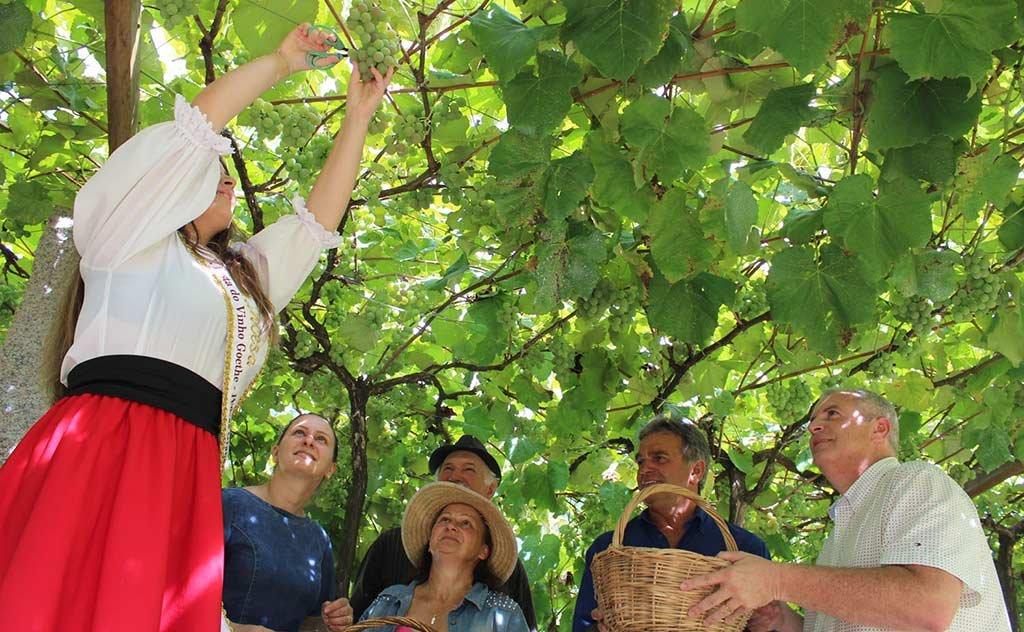 Celebração da 11ª Vindima Goethe acontece no território dos vales