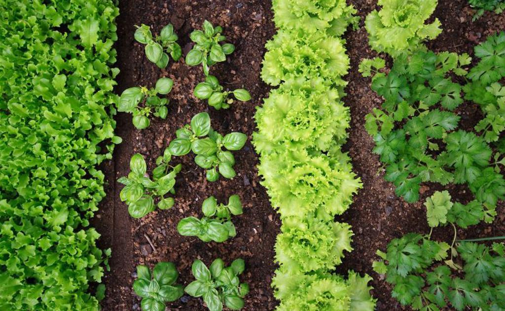 Especialistas explicam a importância do sol e dão ideias de horta orgânica simples