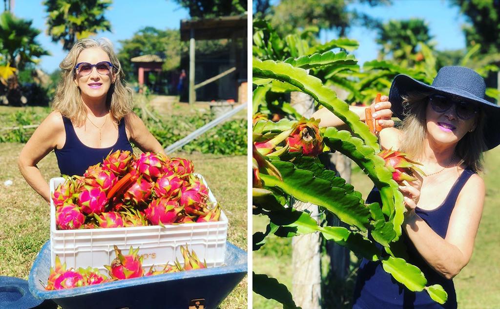 Com o apoio e orientação do marido, empresária cultiva a fruta