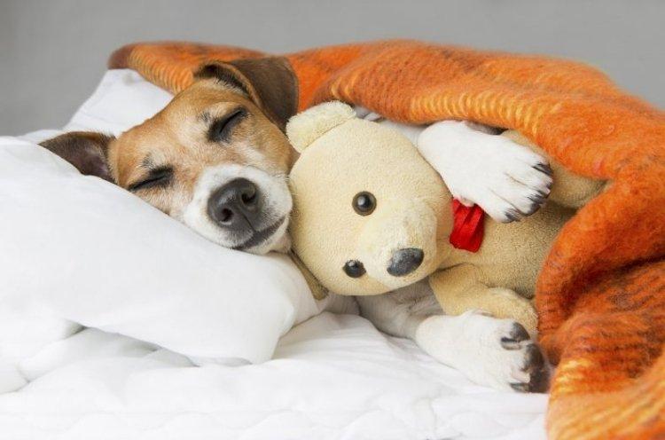 Cães e gatos também sofrem com a chegada do inverno. Saiba como amenizar o frio para eles